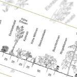 Gartenskizze Mischkultur schwarz/weiss