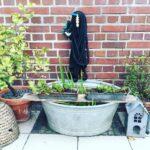 Zinkwanne mit Pflanzen