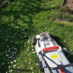 Akku-Rasenmäher auf ungemähter Gänsenblümchenwiese