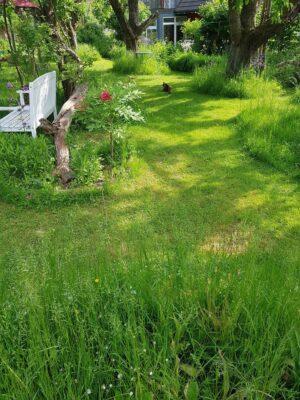 durch Akku-Rasenmäher gepflegte Wiese